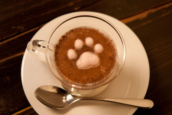 A cat paw marshmallow in a cup of cocoa